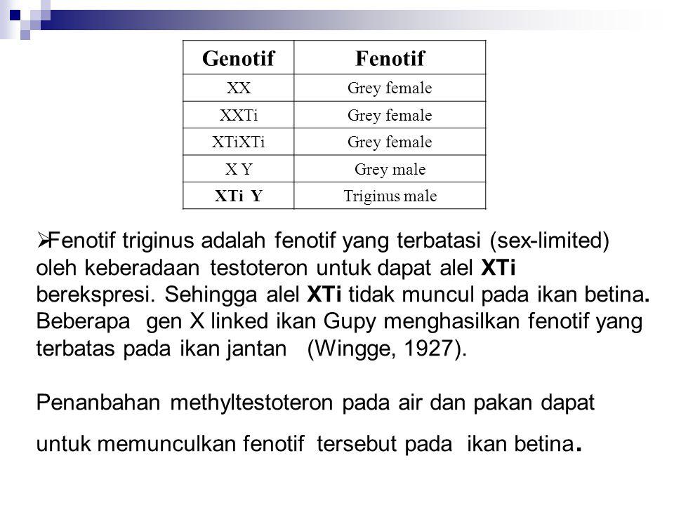  Fenotif triginus adalah fenotif yang terbatasi (sex-limited) oleh keberadaan testoteron untuk dapat alel XTi berekspresi. Sehingga alel XTi tidak mu