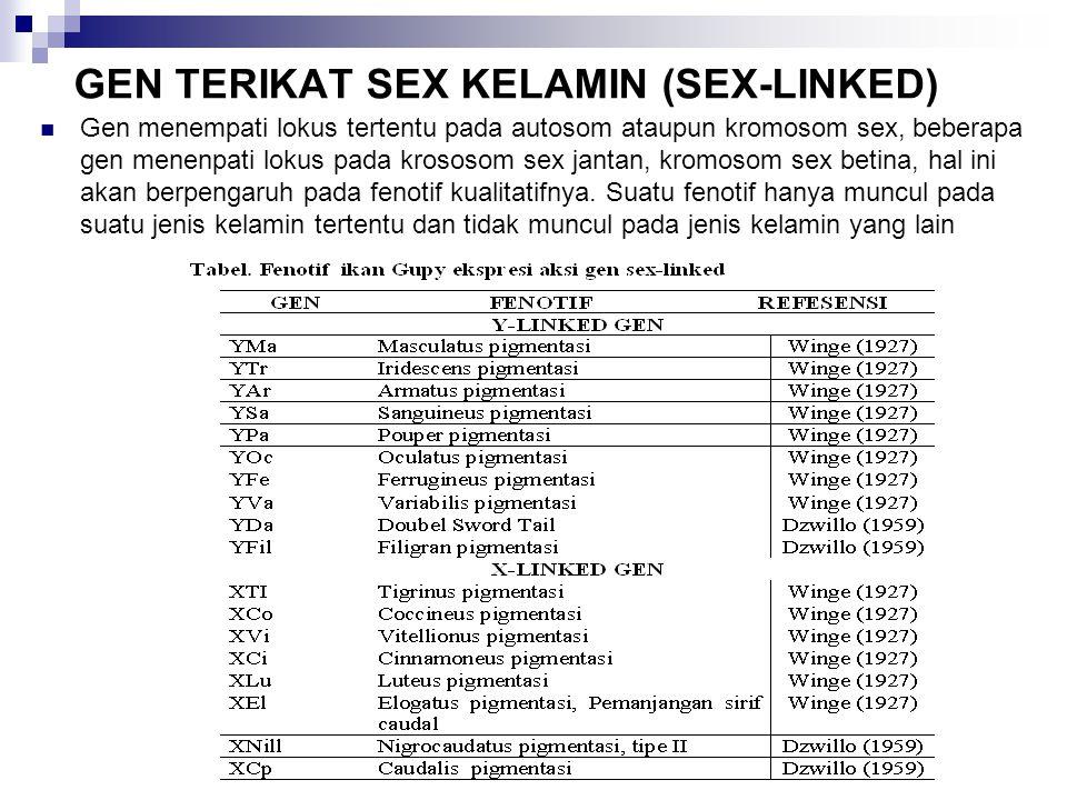 GEN TERIKAT SEX KELAMIN (SEX-LINKED)  Gen menempati lokus tertentu pada autosom ataupun kromosom sex, beberapa gen menenpati lokus pada krososom sex jantan, kromosom sex betina, hal ini akan berpengaruh pada fenotif kualitatifnya.
