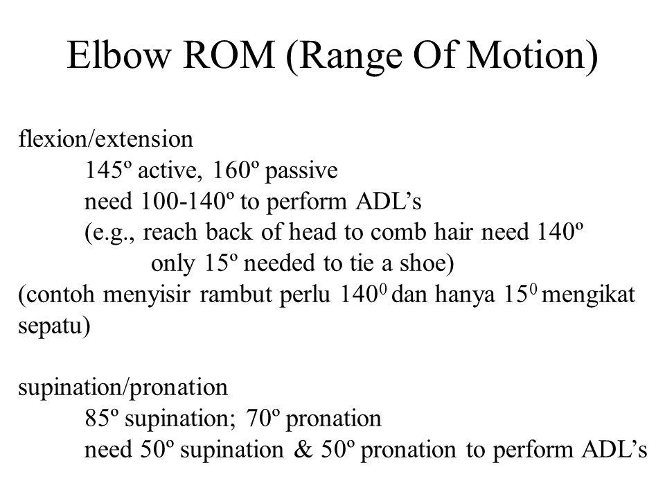 Note: Brachialis is the MOST EFFECTIVE elbow flexor.