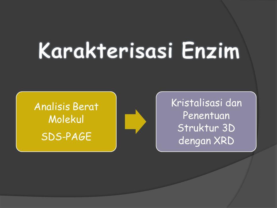 Analisis Berat Molekul SDS-PAGE Kristalisasi dan Penentuan Struktur 3D dengan XRD