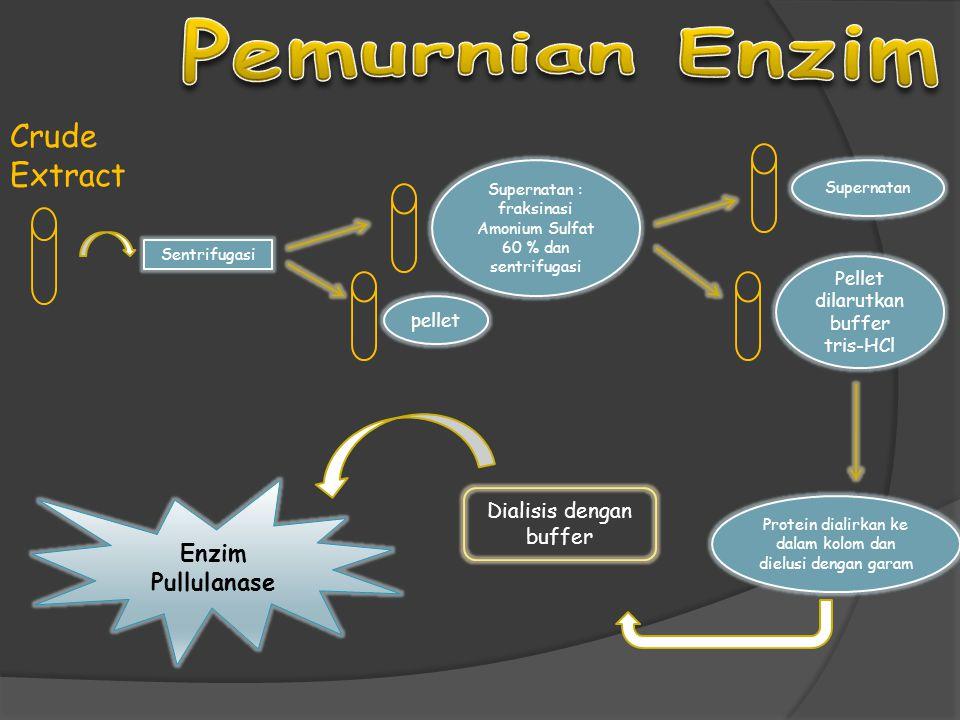 Crude Extract Sentrifugasi Supernatan pellet Protein dialirkan ke dalam kolom dan dielusi dengan garam Dialisis dengan buffer Enzim Pullulanase Pellet dilarutkan buffer tris-HCl Supernatan : fraksinasi Amonium Sulfat 60 % dan sentrifugasi