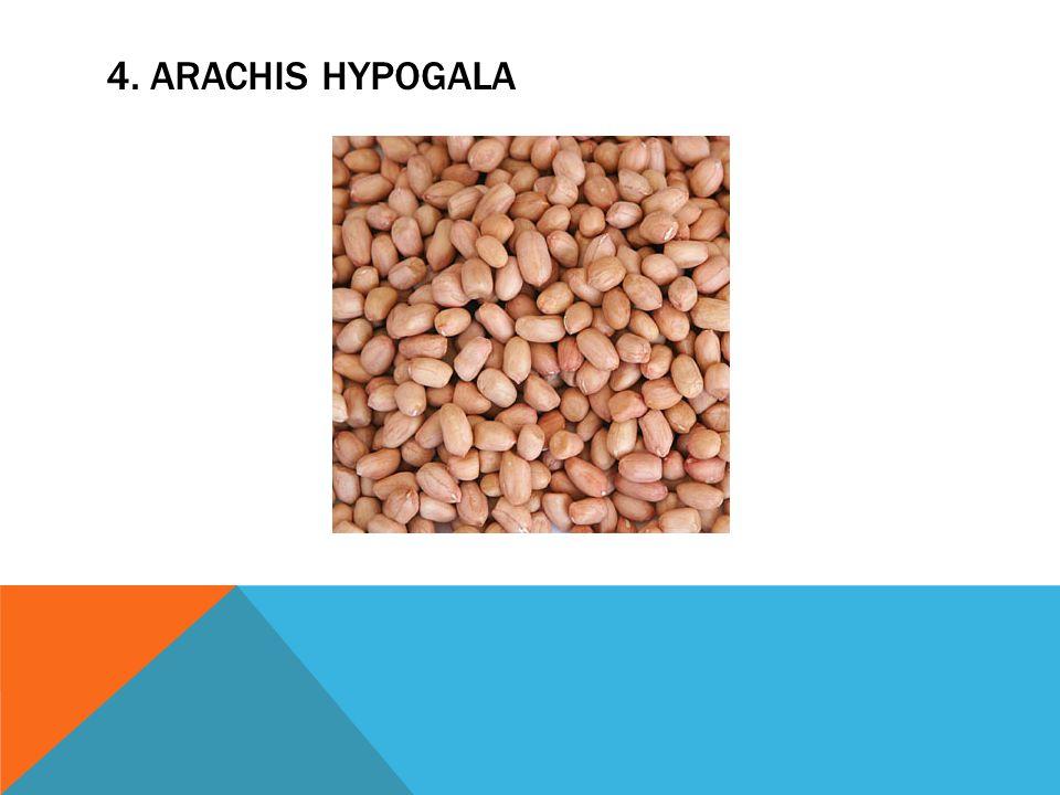 4. ARACHIS HYPOGALA