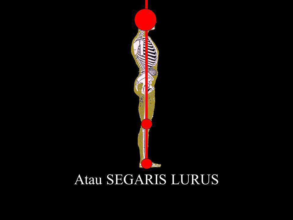 Atau SEGARIS LURUS