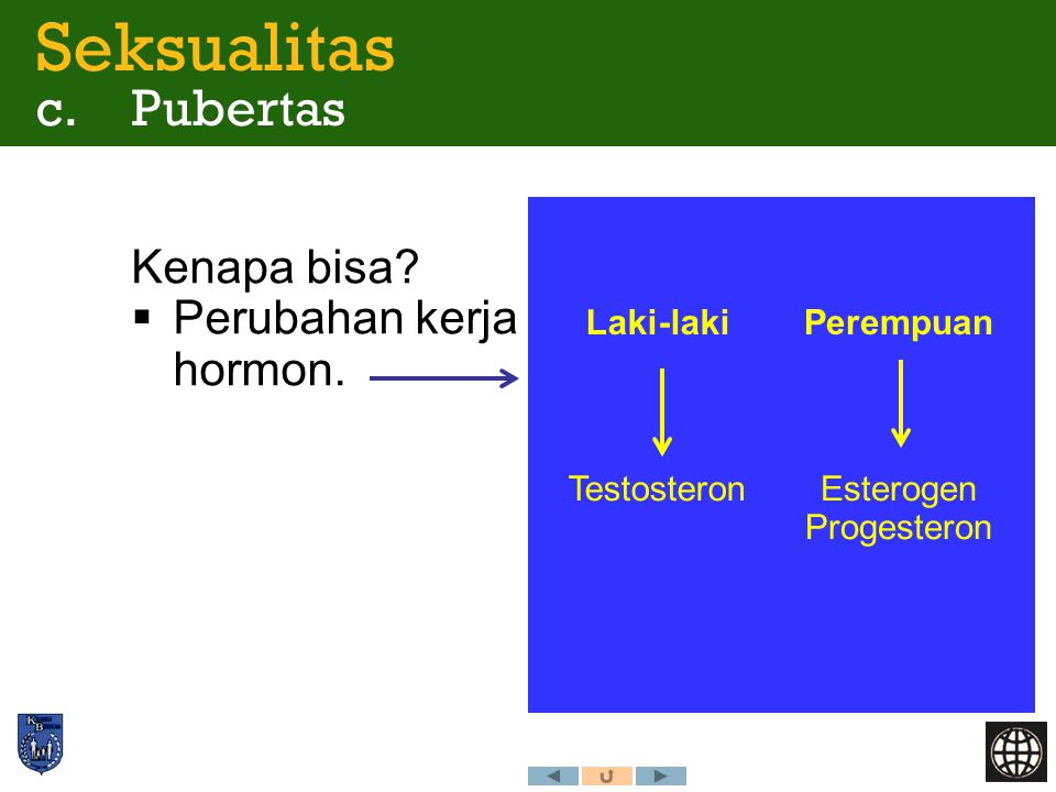 Kenapa bisa?  Perubahan kerja hormon. Seksualitas c. Pubertas Esterogen Progesteron Testosteron PerempuanLaki-laki