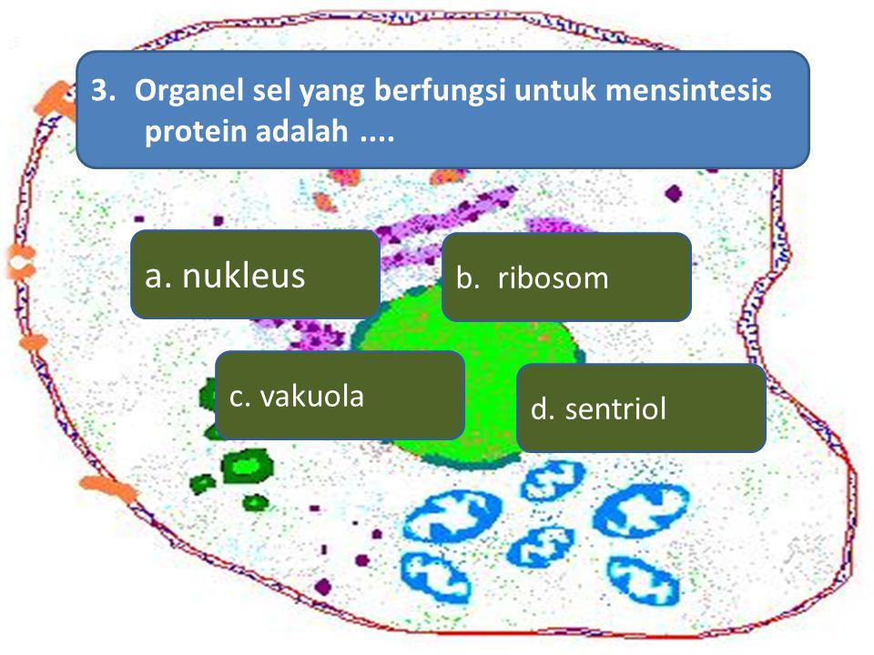 3.Organel sel yang berfungsi untuk mensintesis protein adalah.... a. nukleus d. sentriol c. vakuola b. ribosom