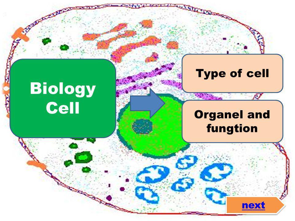 Sel Prokariotik • Tidak memiliki inti sel yang jelas • Organel-organelnya tidak dibatasi membran • Membran sel tersusun atas senyawa peptidoglikan • Diameter sel antara 1- 10mm Mengandung 4 subunit RNA polymerase • Susunan kromosomnya sirkuler Sel Eukariotik • Memiliki inti sel yang dibatasi oleh membran inti • Organel-organelnya dibatasi membran • Membran selnya tersusun atas fosfolipid • Diameter selnya antara 10-100mm • Mengandungbanyak subunit RNA polymerase Susunan kromosomnya linier next