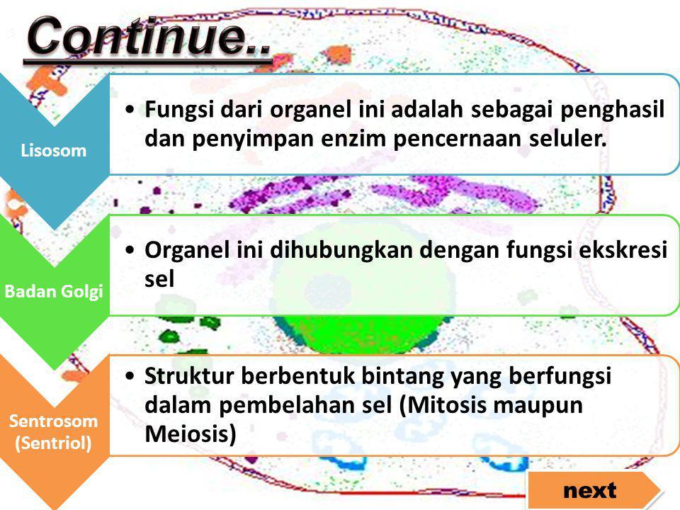 Lisosom •Fungsi dari organel ini adalah sebagai penghasil dan penyimpan enzim pencernaan seluler. Badan Golgi •Organel ini dihubungkan dengan fungsi e