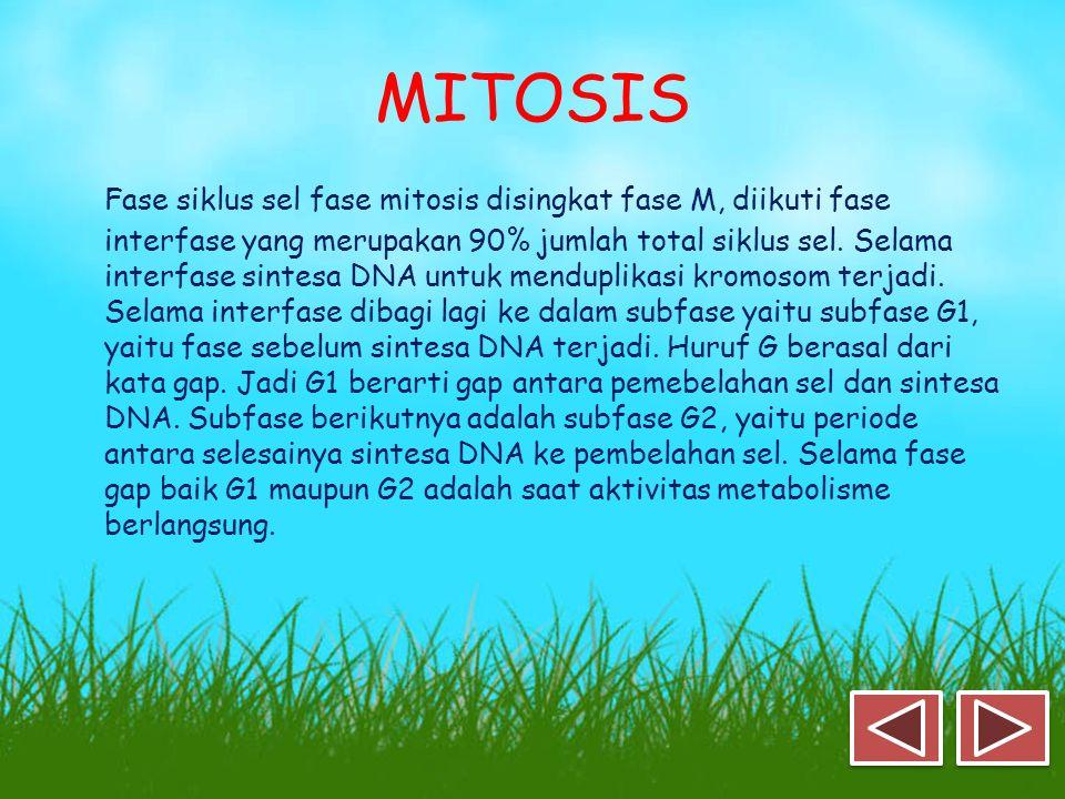 MITOSIS Fase siklus sel fase mitosis disingkat fase M, diikuti fase interfase yang merupakan 90% jumlah total siklus sel.