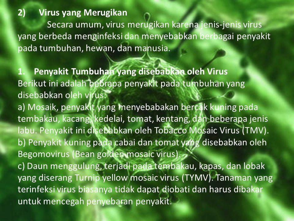 2) Virus yang Merugikan Secara umum, virus merugikan karena jenis-jenis virus yang berbeda menginfeksi dan menyebabkan berbagai penyakit pada tumbuhan, hewan, dan manusia.