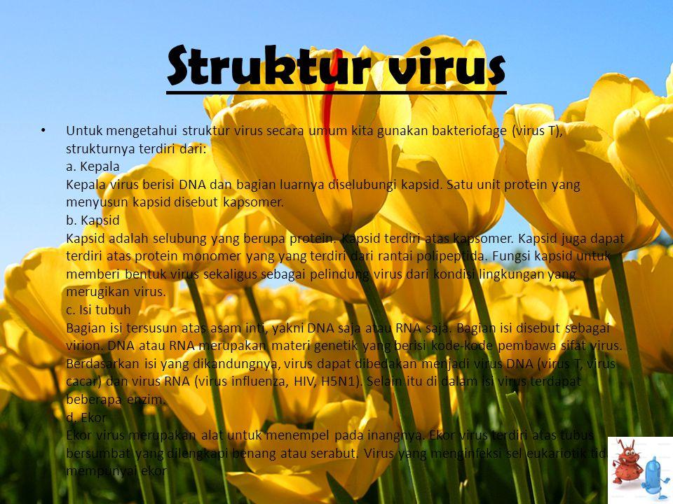 Struktur virus • Untuk mengetahui struktur virus secara umum kita gunakan bakteriofage (virus T), strukturnya terdiri dari: a. Kepala Kepala virus ber