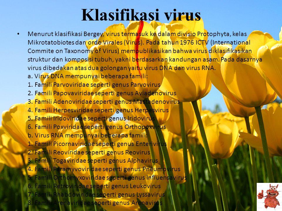 Klasifikasi virus • Menurut klasifikasi Bergey, virus termasuk ke dalam divisio Protophyta, kelas Mikrotatobiotes dan ordo Virales (Virus). Pada tahun