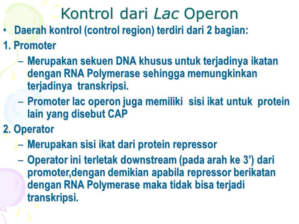 Kontrol dari Lac Operon • Daerah kontrol (control region) terdiri dari 2 bagian: 1. Promoter – Merupakan sekuen DNA khusus untuk terjadinya ikatan den