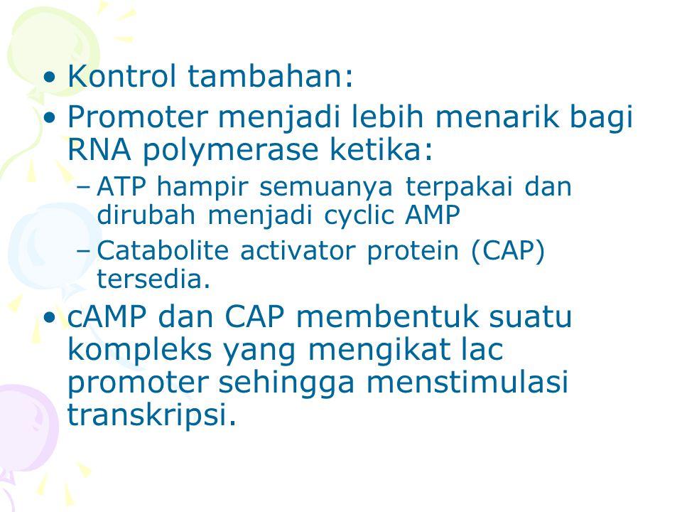 •Kontrol tambahan: •Promoter menjadi lebih menarik bagi RNA polymerase ketika: –ATP hampir semuanya terpakai dan dirubah menjadi cyclic AMP –Catabolit