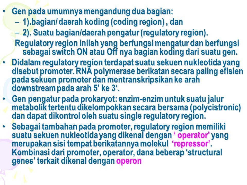 • Gen pada umumnya mengandung dua bagian: – 1).bagian/ daerah koding (coding region), dan – 2). Suatu bagian/daerah pengatur (regulatory region). Regu