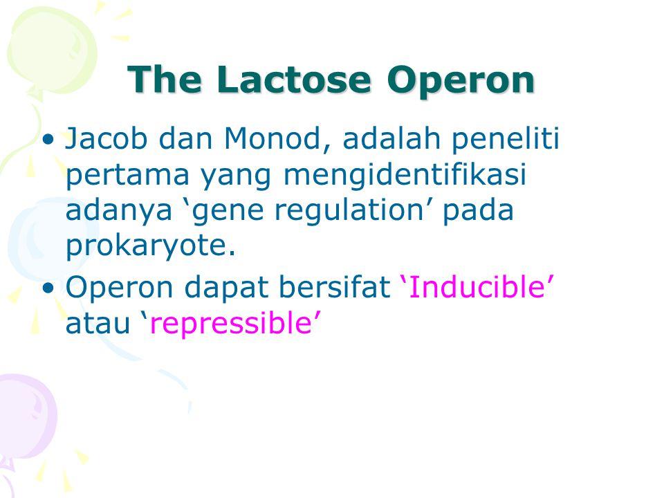 The Lactose Operon •Jacob dan Monod, adalah peneliti pertama yang mengidentifikasi adanya 'gene regulation' pada prokaryote.