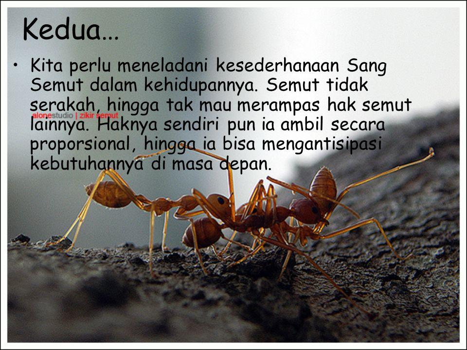 Dari kisah itu… •Sesunguhnya kita bisa mengambil beberapa pelajaran… •Pertama, di saat Sang Semut bisa meraih biji-biji gandum yang sangat besar, bahk