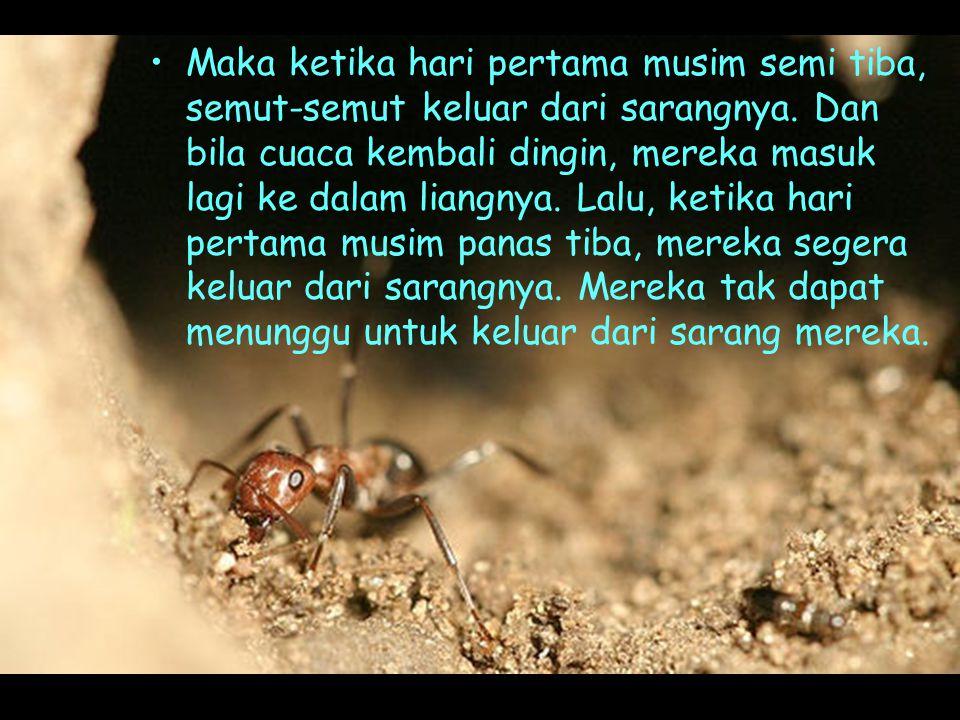 •Maka ketika hari pertama musim semi tiba, semut-semut keluar dari sarangnya.