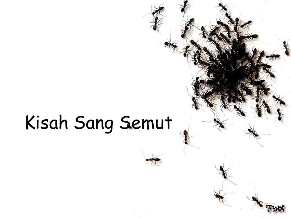 "Sekuat Tenaga! •Seberapa banyak semut akan mengumpulkan makanan mereka di musim panas untuk musim dingin mereka? •""Semampu mereka!!"" http://www.pkpu.o"