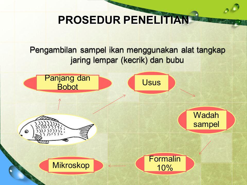 PROSEDUR PENELITIAN Panjang dan Bobot Usus Wadah sampel Formalin 10% Mikroskop