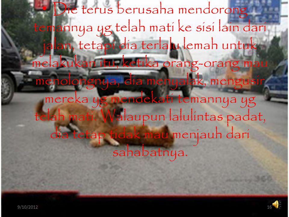 • Seekor anjing, berada di tengah jalan menjaga anjing lain yg mati karena tertabrak mobil, dengan menggunakan kakinya, anjing tersebut berusaha membangunkan temannya..