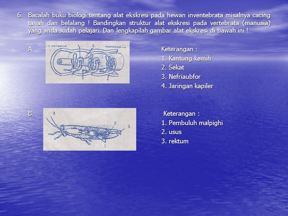 6. Bacalah buku biologi tentang alat ekskresi pada hewan inventebrata misalnya cacing tanah dan belalang ! Bandingkan struktur alat ekskresi pada vert
