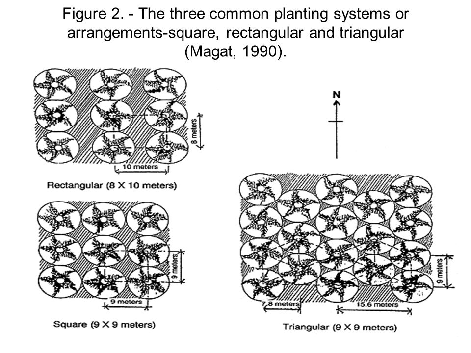 Figure 2. - The three common planting systems or arrangements-square, rectangular and triangular (Magat, 1990).