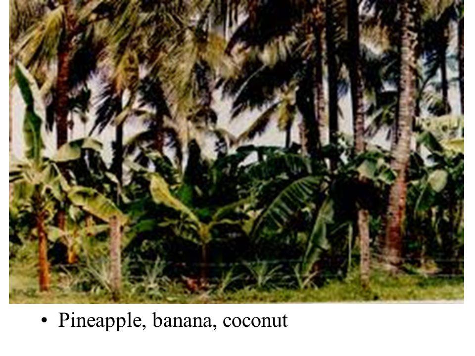 •Pineapple, banana, coconut