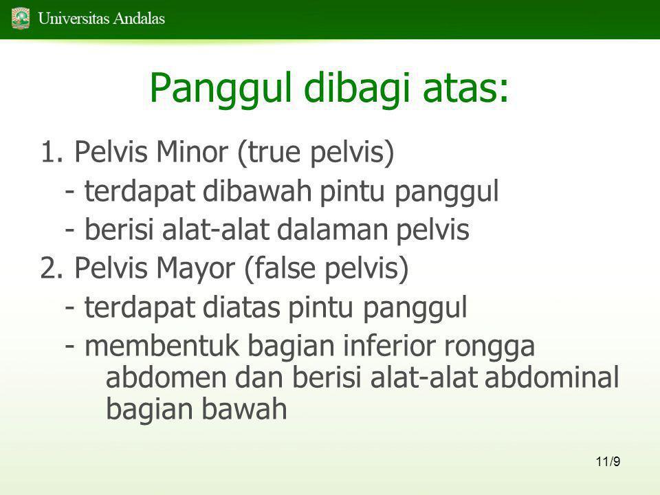 11/9 Panggul dibagi atas: 1. Pelvis Minor (true pelvis) - terdapat dibawah pintu panggul - berisi alat-alat dalaman pelvis 2. Pelvis Mayor (false pelv