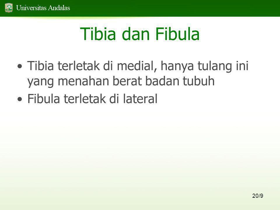 20/9 Tibia dan Fibula •Tibia terletak di medial, hanya tulang ini yang menahan berat badan tubuh •Fibula terletak di lateral