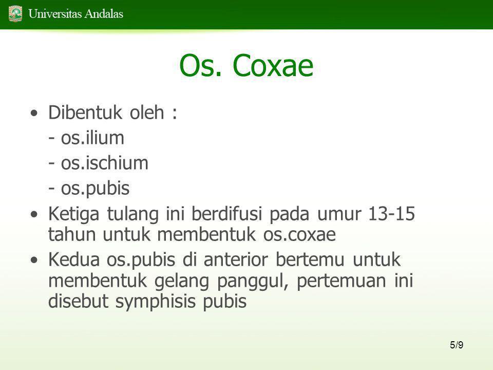 5/9 Os. Coxae •Dibentuk oleh : - os.ilium - os.ischium - os.pubis •Ketiga tulang ini berdifusi pada umur 13-15 tahun untuk membentuk os.coxae •Kedua o