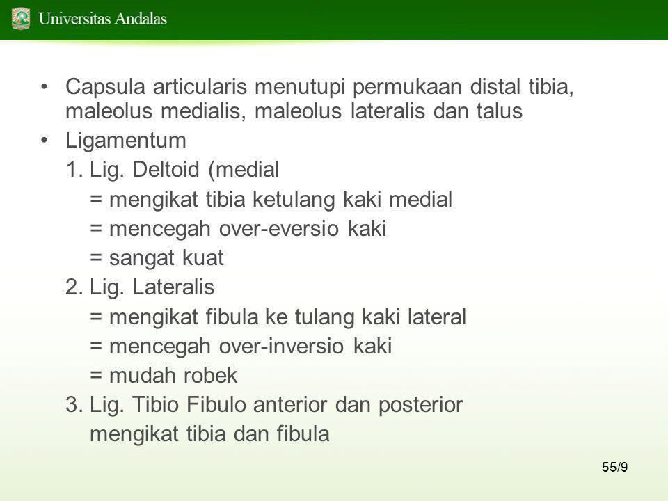55/9 •Capsula articularis menutupi permukaan distal tibia, maleolus medialis, maleolus lateralis dan talus •Ligamentum 1. Lig. Deltoid (medial = mengi