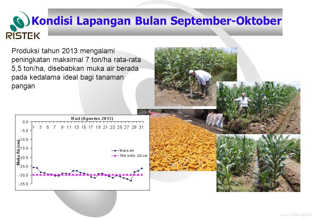 www.ristek.go.id Kondisi Lapangan Bulan September-Oktober Produksi tahun 2013 mengalami peningkatan maksimal 7 ton/ha rata-rata 5,5 ton/ha, disebabkan