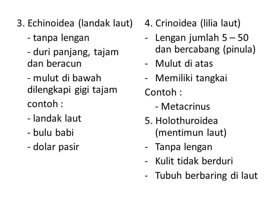 3. Echinoidea (landak laut) - tanpa lengan - duri panjang, tajam dan beracun - mulut di bawah dilengkapi gigi tajam contoh : - landak laut - bulu babi