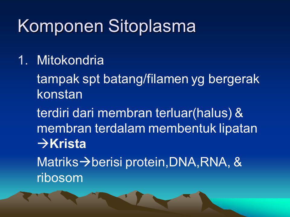 Komponen Sitoplasma 1.Mitokondria tampak spt batang/filamen yg bergerak konstan terdiri dari membran terluar(halus) & membran terdalam membentuk lipat