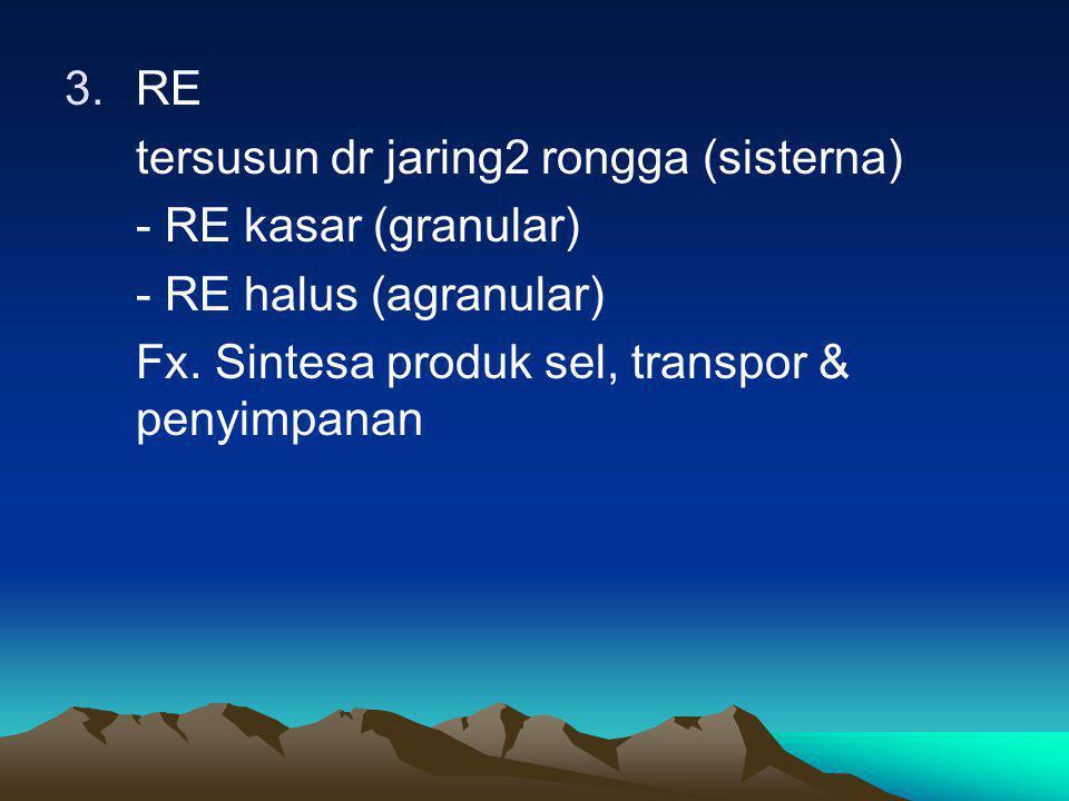 3.RE tersusun dr jaring2 rongga (sisterna) - RE kasar (granular) - RE halus (agranular) Fx. Sintesa produk sel, transpor & penyimpanan