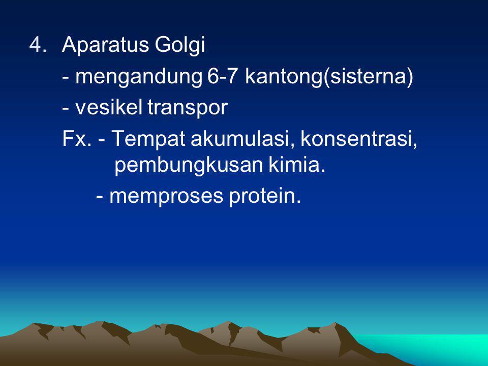 4.Aparatus Golgi - mengandung 6-7 kantong(sisterna) - vesikel transpor Fx. - Tempat akumulasi, konsentrasi, pembungkusan kimia. - memproses protein.