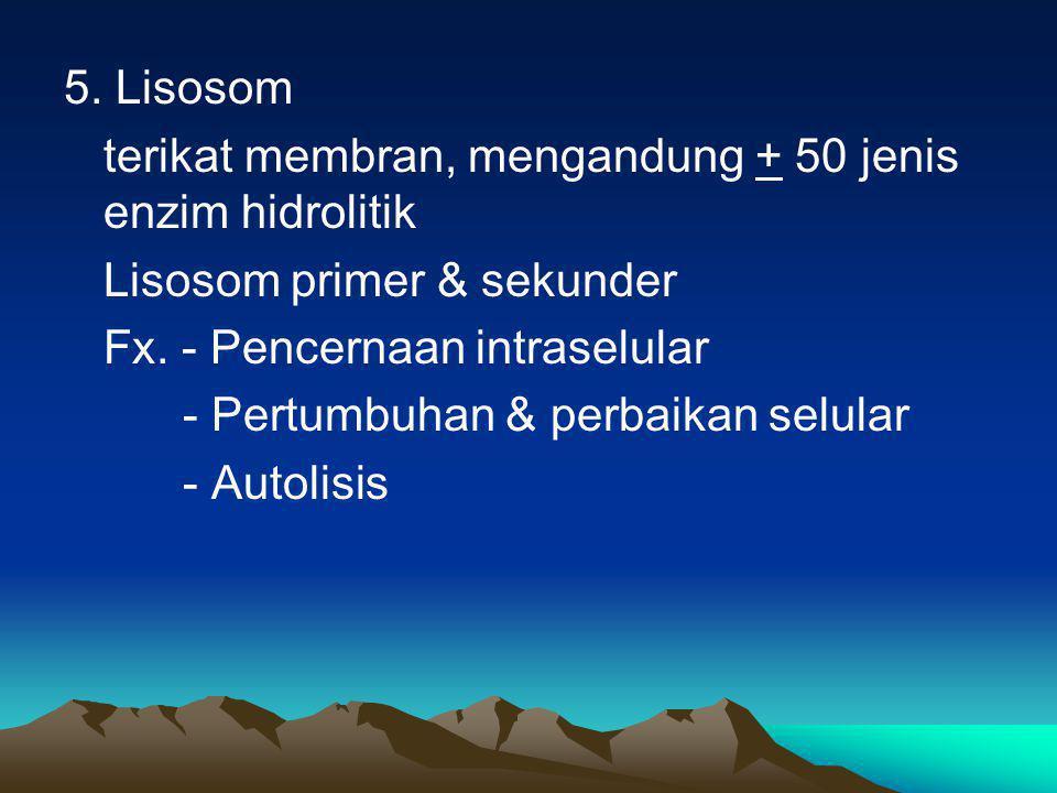 5. Lisosom terikat membran, mengandung + 50 jenis enzim hidrolitik Lisosom primer & sekunder Fx. - Pencernaan intraselular - Pertumbuhan & perbaikan s