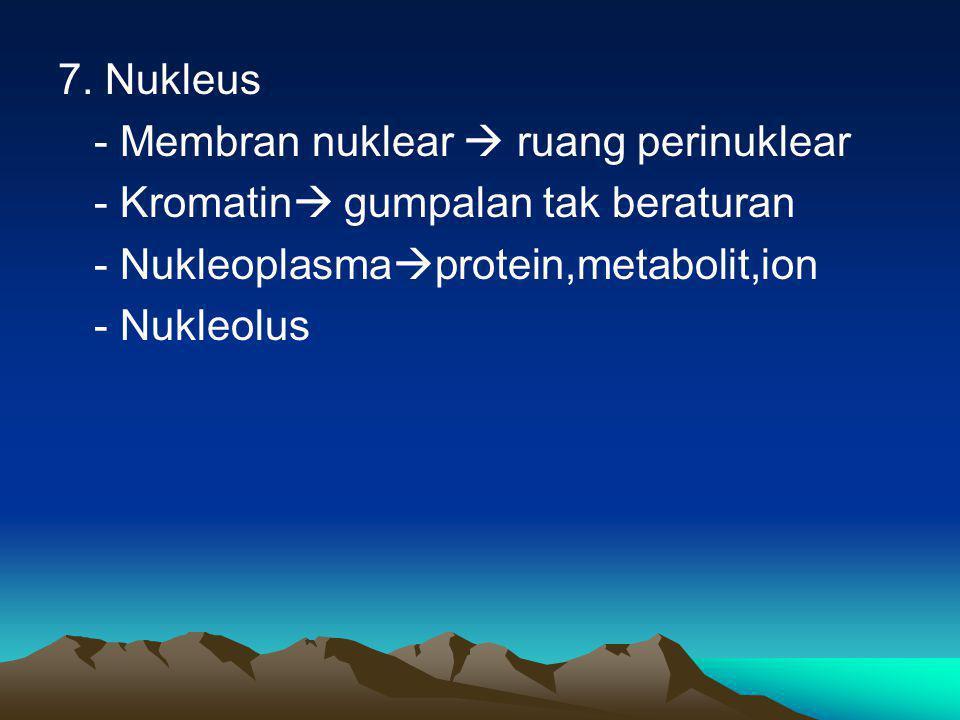 7. Nukleus - Membran nuklear  ruang perinuklear - Kromatin  gumpalan tak beraturan - Nukleoplasma  protein,metabolit,ion - Nukleolus