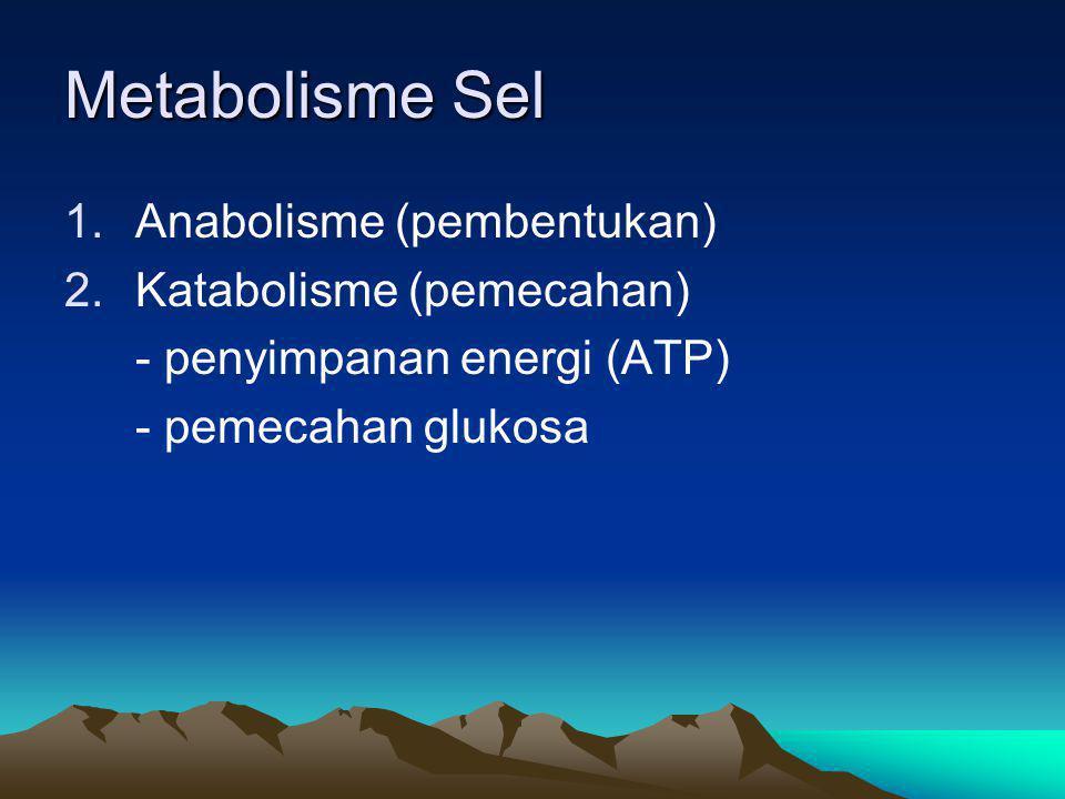 Metabolisme Sel 1.Anabolisme (pembentukan) 2.Katabolisme (pemecahan) - penyimpanan energi (ATP) - pemecahan glukosa