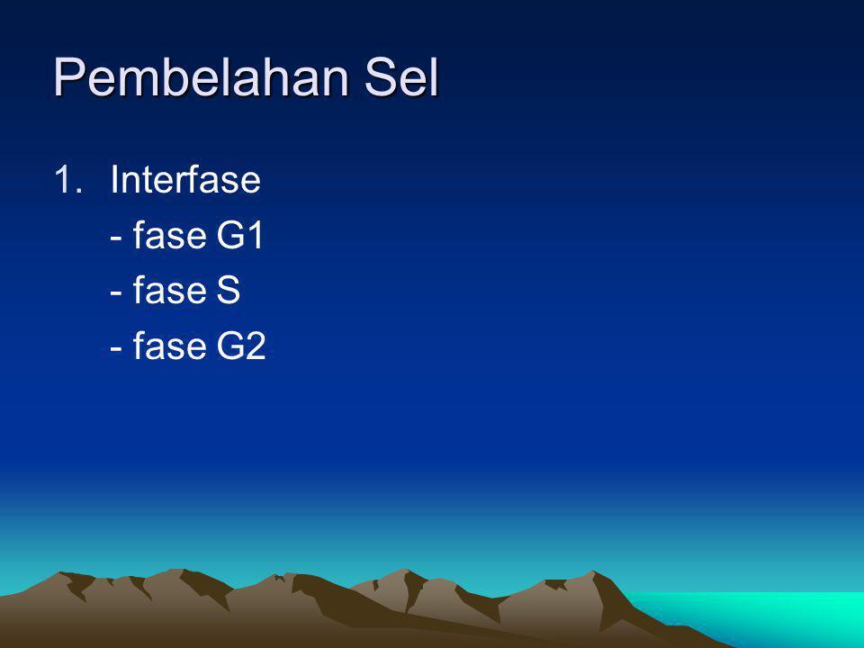Pembelahan Sel 1.Interfase - fase G1 - fase S - fase G2