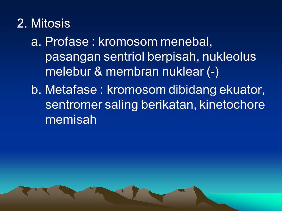 2. Mitosis a. Profase : kromosom menebal, pasangan sentriol berpisah, nukleolus melebur & membran nuklear (-) b. Metafase : kromosom dibidang ekuator,