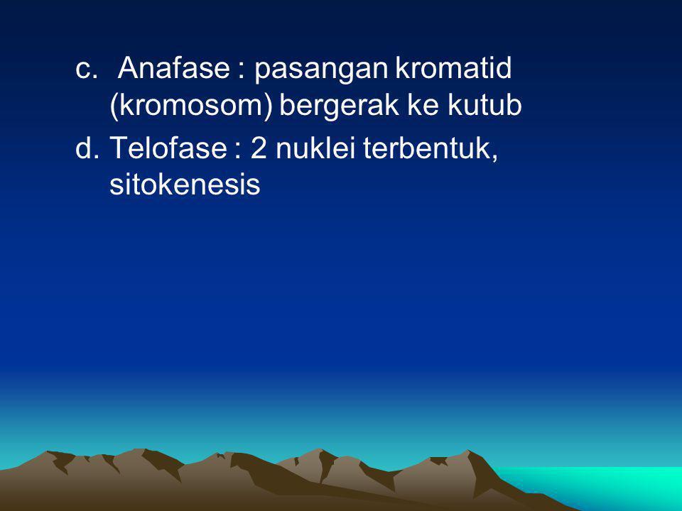 c. Anafase : pasangan kromatid (kromosom) bergerak ke kutub d.Telofase : 2 nuklei terbentuk, sitokenesis