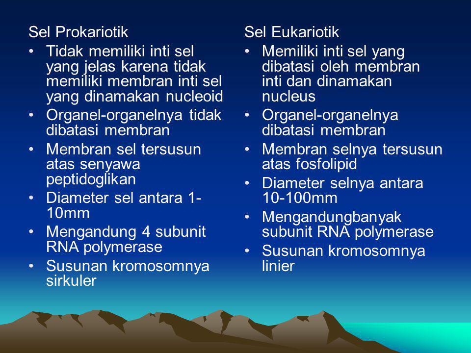 Sel Prokariotik •Tidak memiliki inti sel yang jelas karena tidak memiliki membran inti sel yang dinamakan nucleoid •Organel-organelnya tidak dibatasi