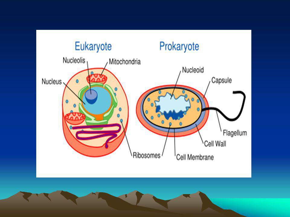 Komponen Sel  Membran sel  Sitoplasma  Organel  nukleus