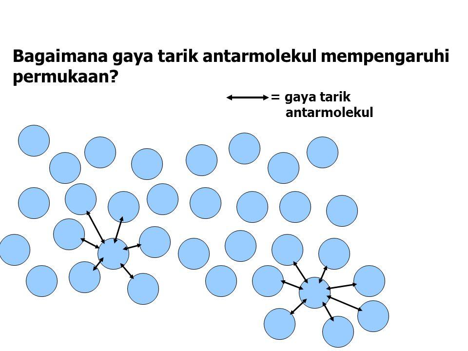 Bagaimana gaya tarik antarmolekul mempengaruhi permukaan? = gaya tarik antarmolekul