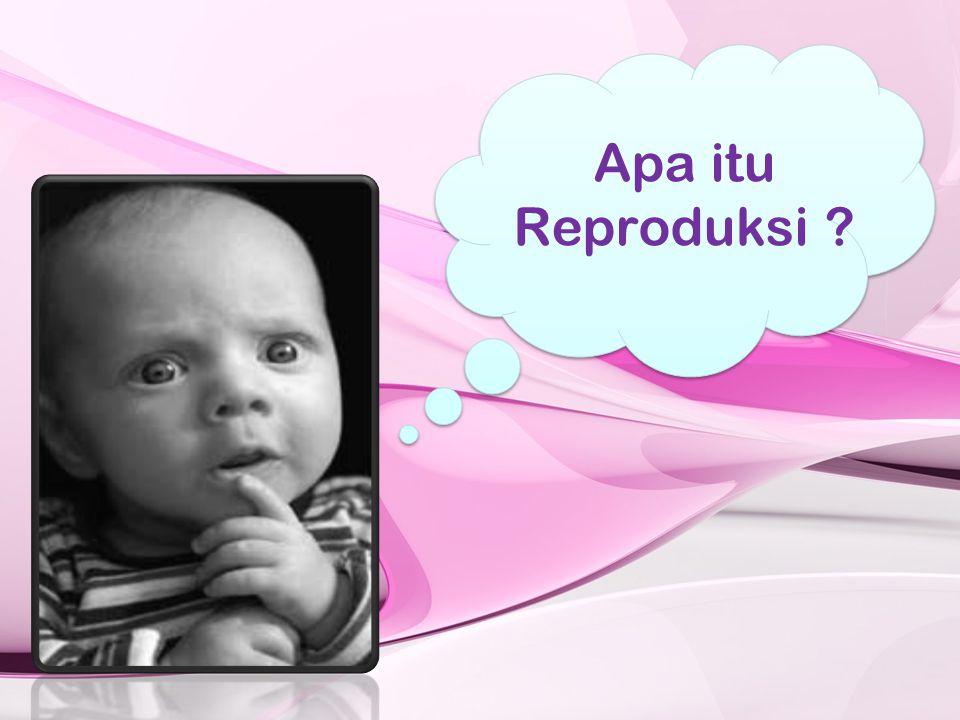 re = kembali produksi = membuat atau menghasilkan Reproduksi = suatu proses kehidupan manusia dalam menghasilkan keturunan demi kelestarian hidup.