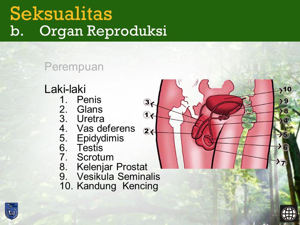 Seksualitas b. Organ Reproduksi -Ereksi -Ejakulasi