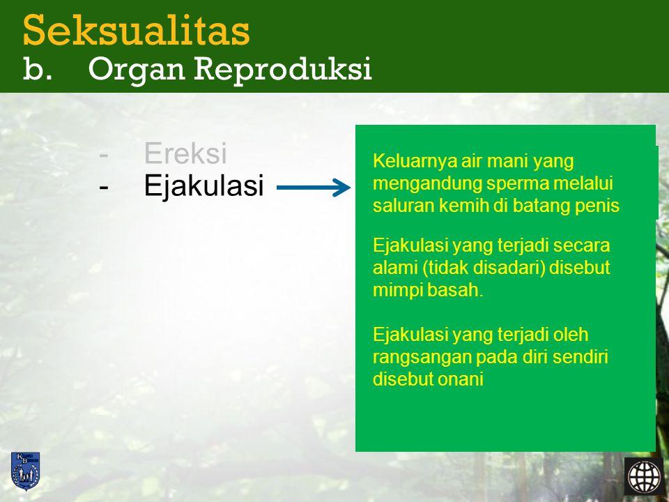 Seksualitas b. Organ Reproduksi -Ereksi -Ejakulasi Keluarnya air mani yang mengandung sperma melalui saluran kemih di batang penis Ejakulasi yang terj