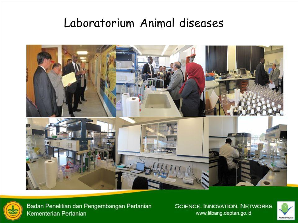 Laboratorium Animal diseases