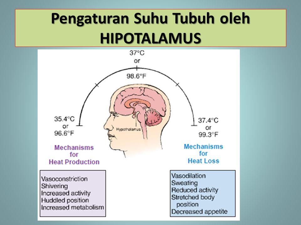Pengaturan Suhu Tubuh oleh HIPOTALAMUS